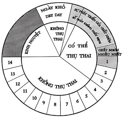 Chu kỳ vòng kinh bao lâu là bình thường?